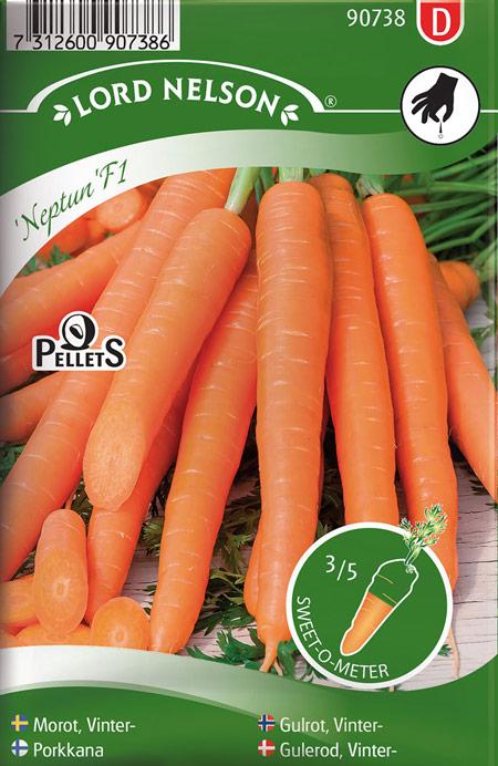 0905026 DAUCUC carota L Porkkana 'Neptun' F1