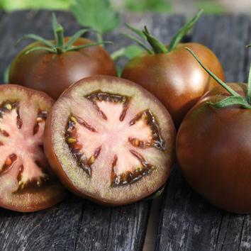 0907026 SOLANUM lycopersicum Tomaatti F1 'Kakao'