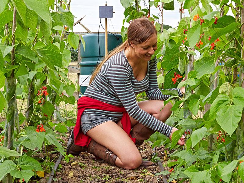 Torktålig trädgård med Irrigatia solcellsdriven bevattning