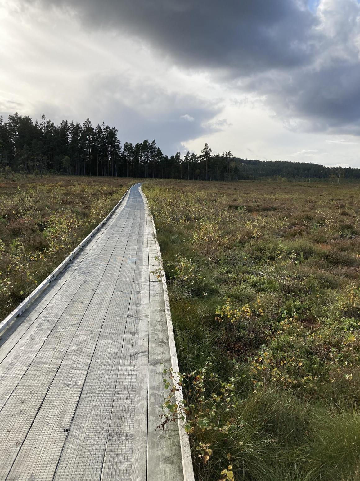 Foto på en stig i naturen.