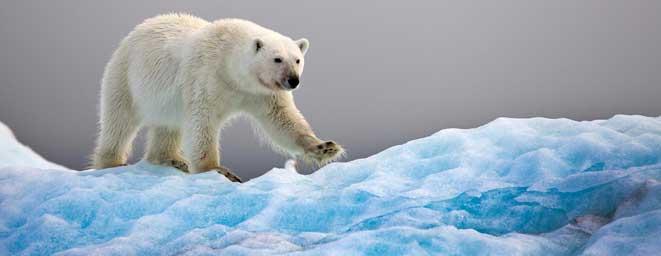 Bild från Svalbard