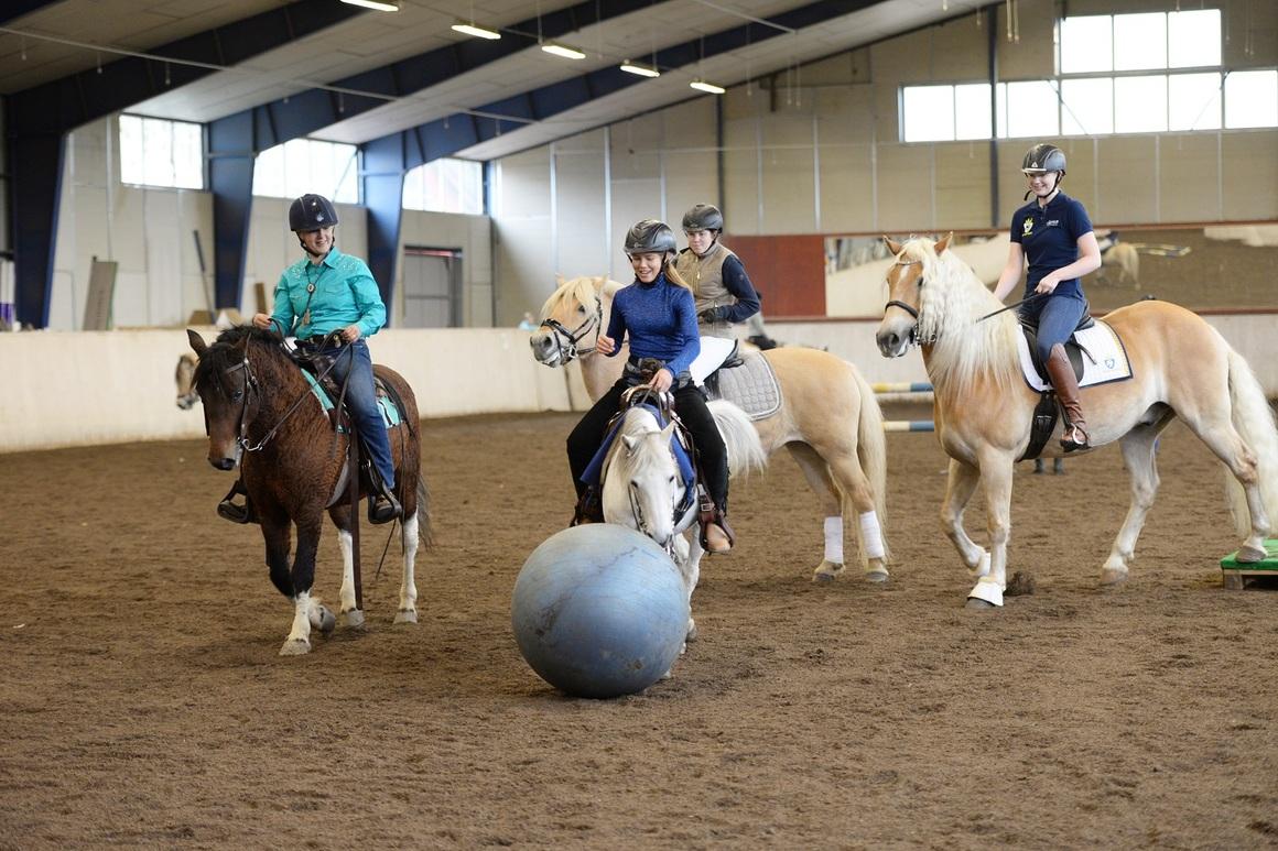Hästar och ryttare spelar med boll i ett ridhus