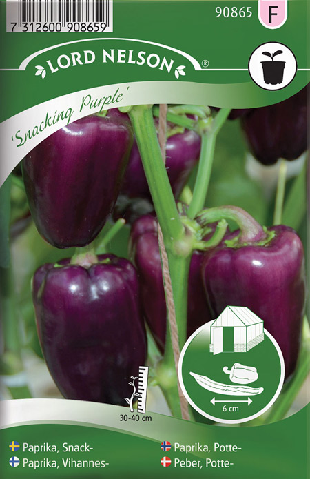 0999126 CAPSICUM annuum Vihannespaprika 'Snacking Purple'