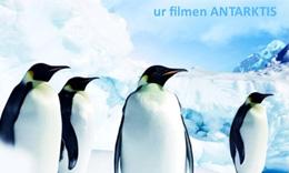 Tyck till om film
