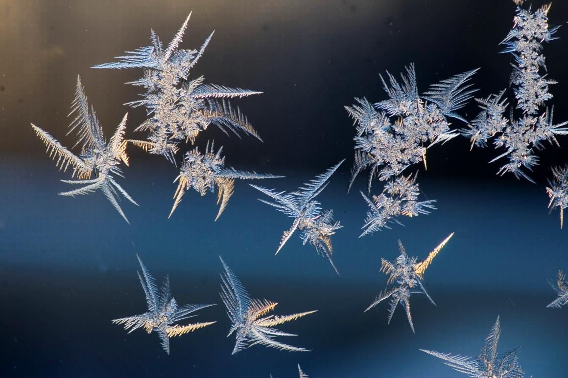 Snöstjärnor Fotograf: Sven G Nilsson
