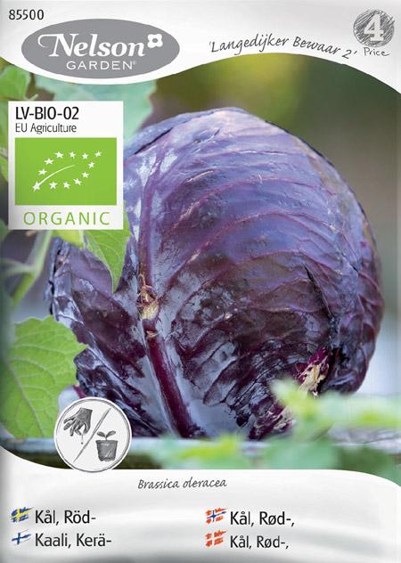 0903060 BRASSICA oleracea Punakaali 'Langedijker Bewaar 2'