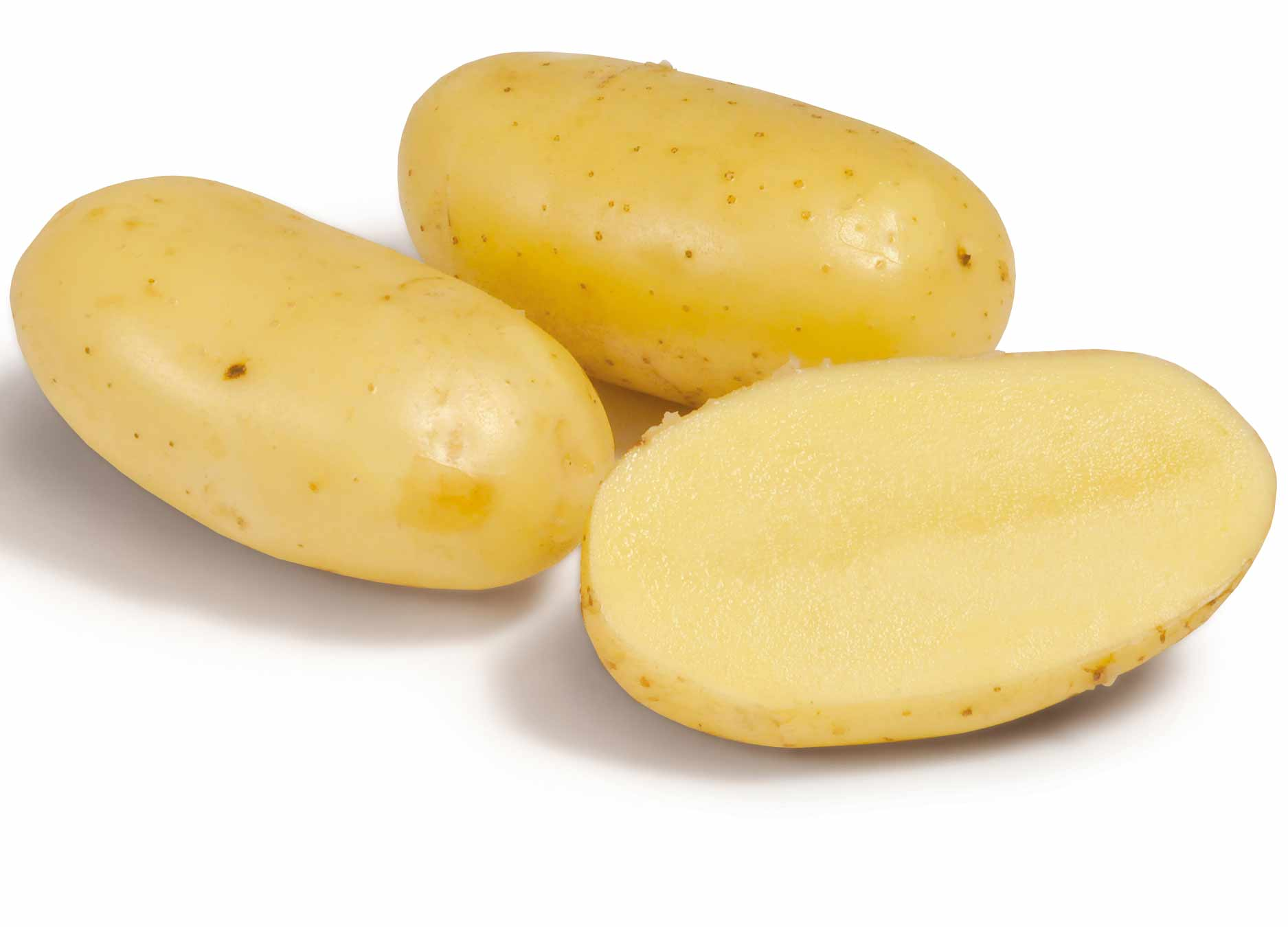 1200029 SOLANUM tuberosum  Siemenperuna Calle (Challinger) 2,5 kg